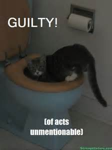 Guilty Cats with Funny Captions
