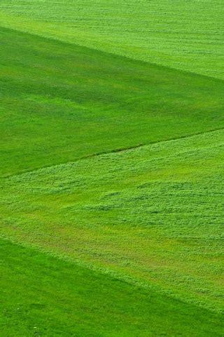 natural grass  mobile wallpaper