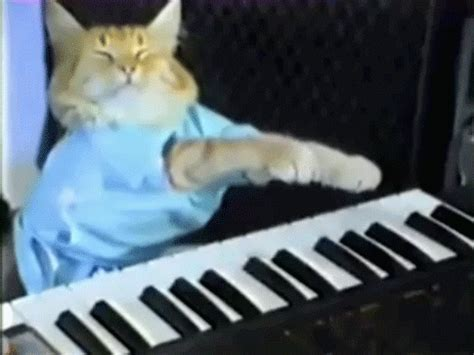 piano cat the endgame of the credit card nation 40 year bull