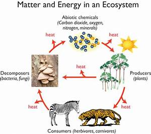 Cset Science Subtest Ii  Ecology Biomes  Energy Flow