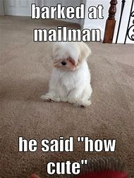 Cute Funny Animal Memes Dog