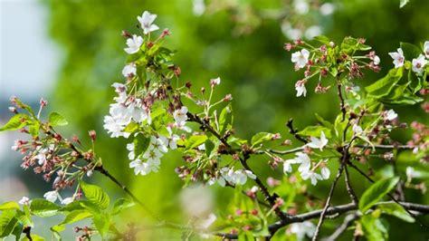 Pavasaris ne už kalnų: kokius orus žada Lietuvai ir ...