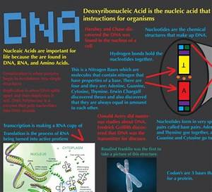 Top 5 Dna Infographics