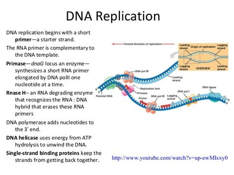 the enzyme uses atp to unwin dna template dna rna protein in microbes