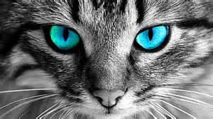cats eye why you should never look into cats