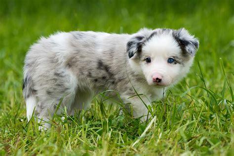 Du findest bei uns beliebte, schöne, süße und lustige hundenamen für rüden und hündinnen. Hundebabys: Über das Geschäft mit den süßen, kleinen Hundewelpen