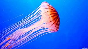 19 Jellyfish GIFs to Make Your Day More Relaxing