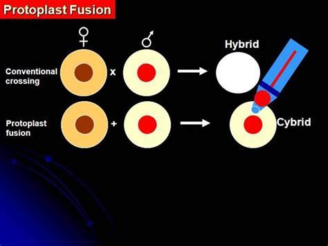 protoplast fusion animated depiction authorstream