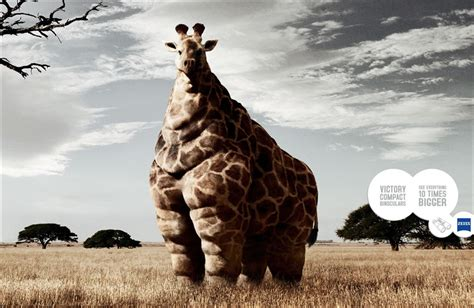 HD Cool Animals Wallpapers Download Free 342526