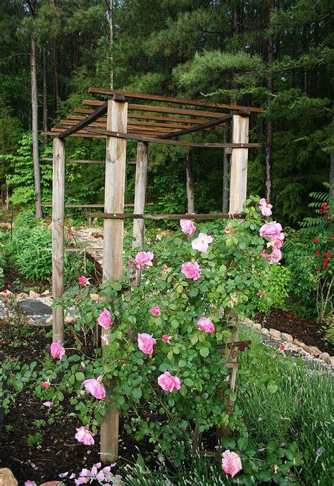 How To Build A Trellis For Climbing Roses Hometalk