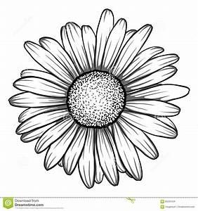 Drawn daisy pencil - Pencil and in color drawn daisy pencil