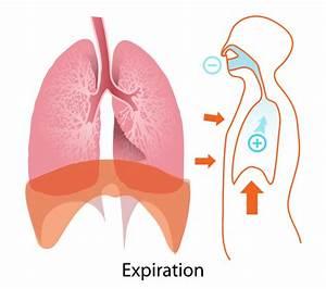 Expiration Diagram Clip Art At Clker Com