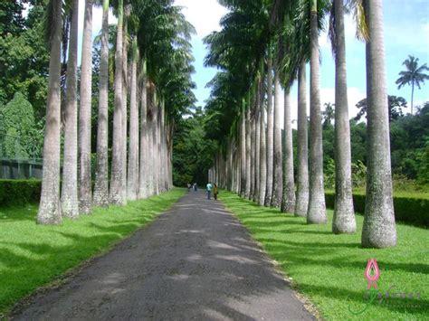 Botanischer Garten Sri Lanka by Peradeniya Botanic Gardens Sri Lanka Sri Lanka