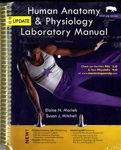 human anatomy Textbooks - SlugBooks