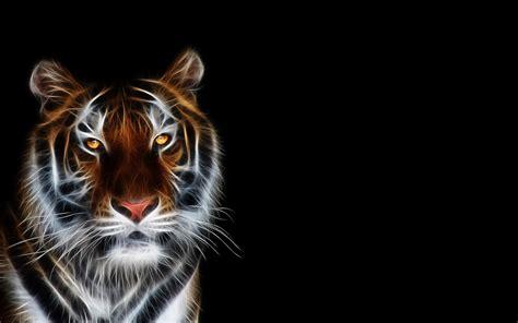 fondos de tigre fondos de pantalla wallpapers
