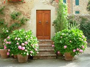Hortensien überwintern Im Garten : hortensie so pflegen sie den bl tentraum richtig ~ Frokenaadalensverden.com Haus und Dekorationen