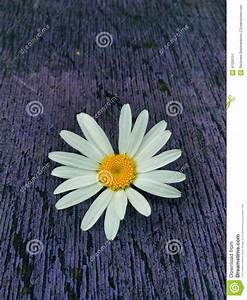 Wild Flower Stock Photo - Image: 41200151