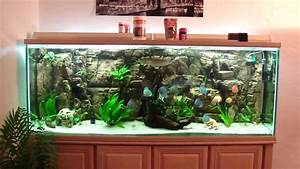Fish Tank Background Discus Fish Youtube