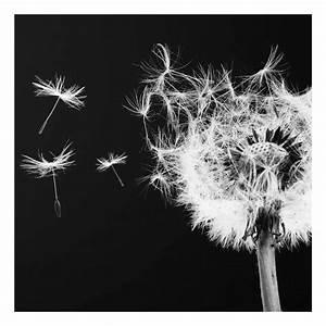 Bild Pusteblume Schwarz Weiß : acrylbild pusteblume schwarz wei ~ Bigdaddyawards.com Haus und Dekorationen