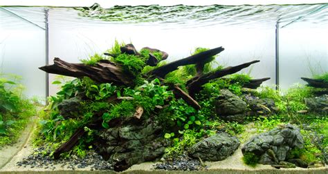 Aquascaping With Rocks by Guide To Aquascaping Aquariums Romsey World Of Water