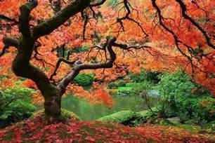 just cool pics the most beautiful trees