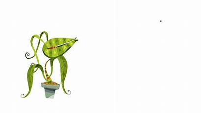 Portfolio Animated Plant Tv