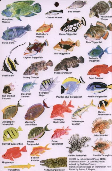 indian ocean fish guide  reef fish   indian ocean