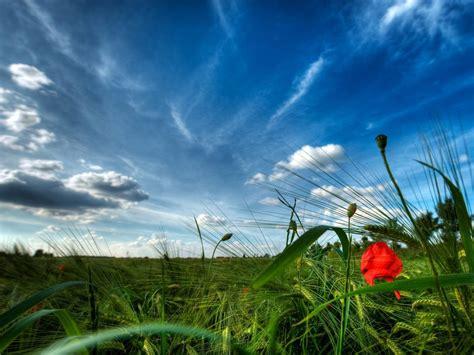 paisaje natural en el campo  fondos de