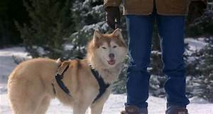 Duchess (Snow Dogs) - DisneyWiki