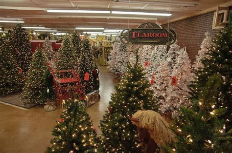christmas tree shopping pictures photos and images for