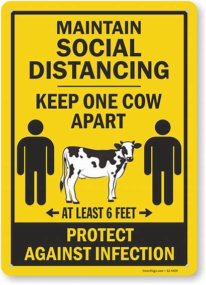 Funny Distancing Social Apart Signs Keep Cow