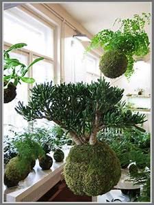 Kokedama Selber Machen : uniknya koleksi tanaman kekinian kokedama ~ Orissabook.com Haus und Dekorationen