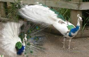 wedding dress sub indonesia save our green birds