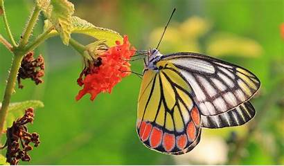Zoom Nature Butterfly Insects Close Wallpapers Desktop