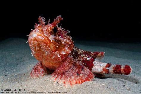 images  marine life nautical  pinterest