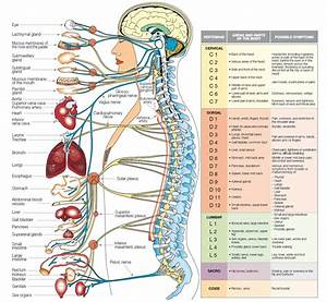 Neurobiology Physiology And Behavior  U2013 Student To Student