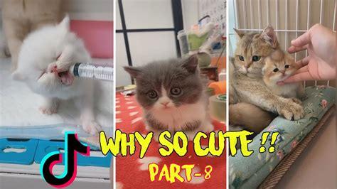 cute why kittens cats damn
