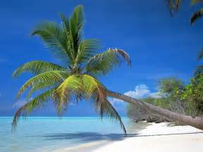 coconut palm tree pictures facts on coconut palm trees