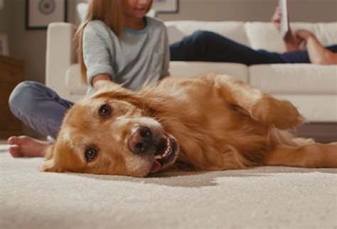 pet friendly hardwood floors buyer s guide pet friendly flooring go mobile flooring