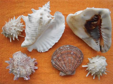 coquillage wiktionary