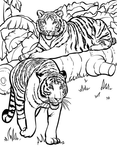 coloring pages animal wild tigers