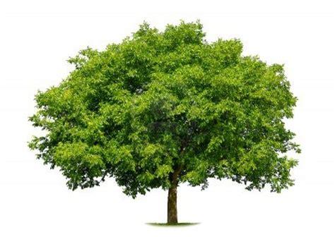 arbres envie de planter un arbre au sein de votre jardin