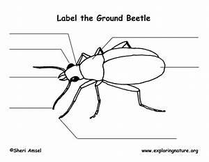Bat Body Diagram Label