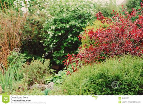 colorful bushes and shrubs beautiful view with colorful trees and shrubs english garden in spring stock photo image