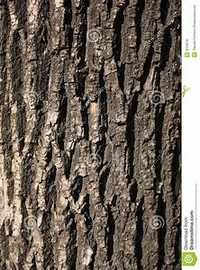 Rough texture of tree stock photo. Image of rough, tree ...