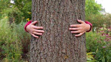 chinese tree huggers china   image