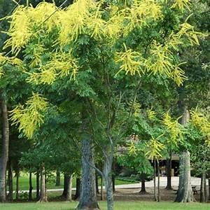 Arbre à Croissance Rapide Pour Ombre : des arbres pour l 39 ombre gamm vert ~ Premium-room.com Idées de Décoration