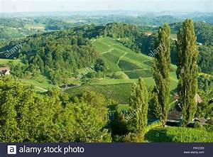 U00d6sterreich  Steiermark  Bezirk Leibnitz  Landschaft An Der Stock Photo  98003528