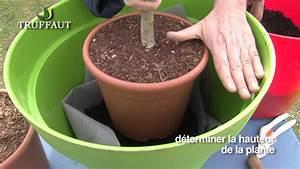 Tailler Un Citronnier : fruitier en pot plantation et entretien jardinerie ~ Melissatoandfro.com Idées de Décoration