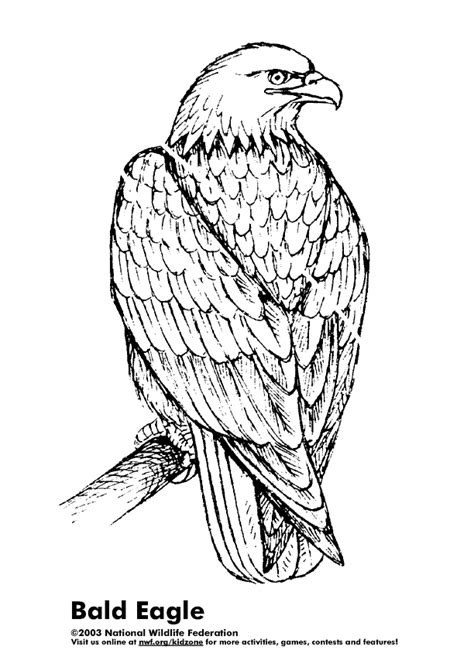 coloring activity pages bald eagle coloring page